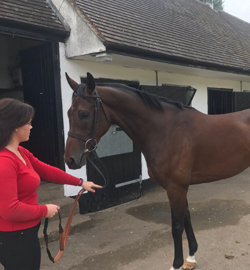 Full Bore horse trained by Nicky Henderson