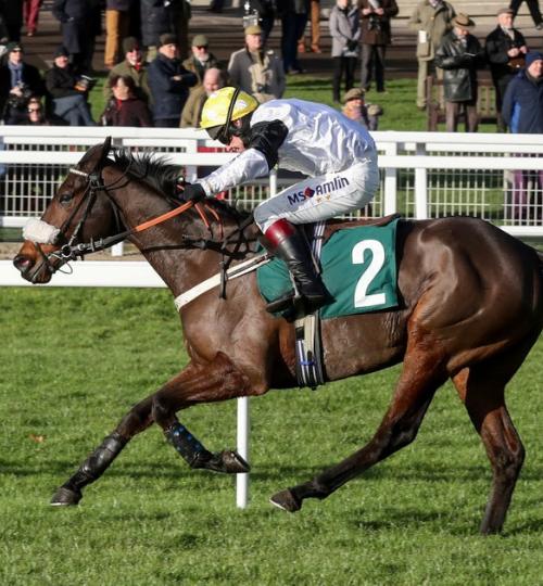 Western Ryder horse